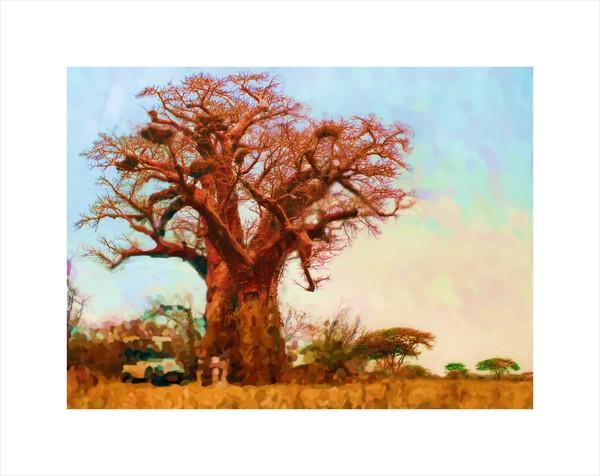 blixen-baobab