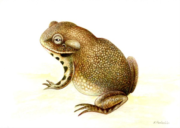 A toad 2