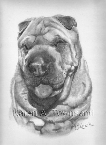 Shar-pei Commission