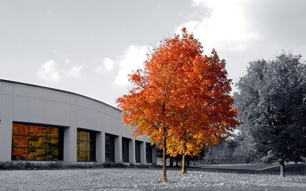 Autumn-to-fall