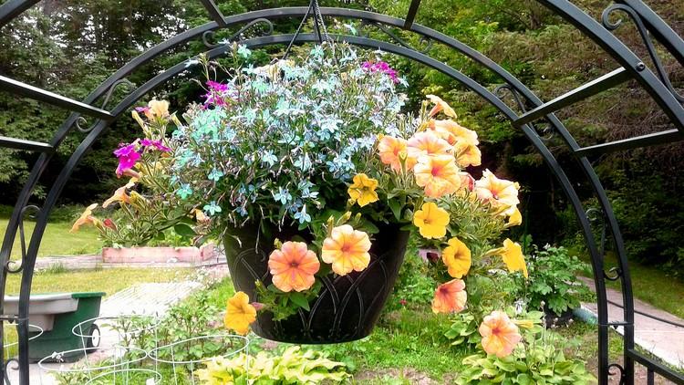 Summer plantings 2