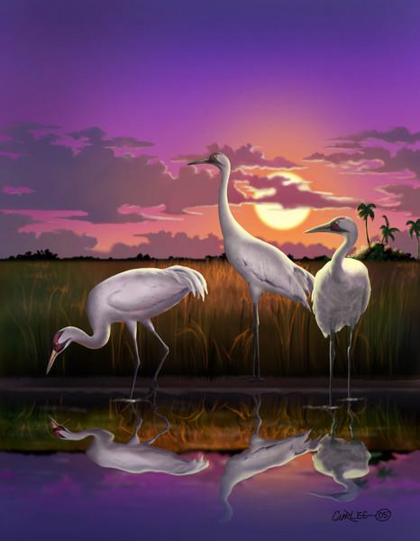 Whooping Cranes Digital Painting