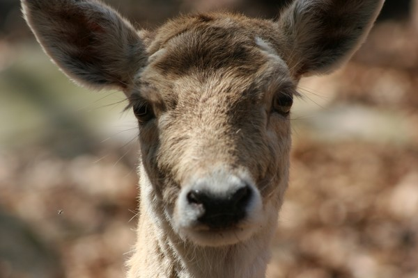 ~The Deer & Her Perty Close-Up~