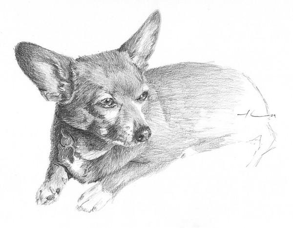 wp-lg chihuahua drawing
