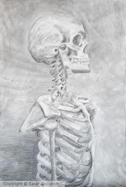 Upright Skeleton