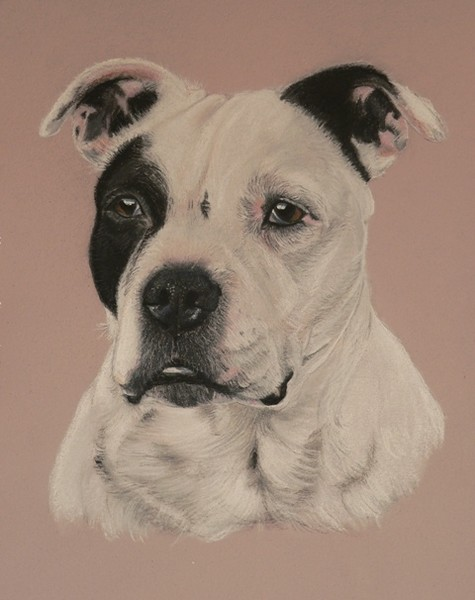 Buster.  Staffordshire Terrier