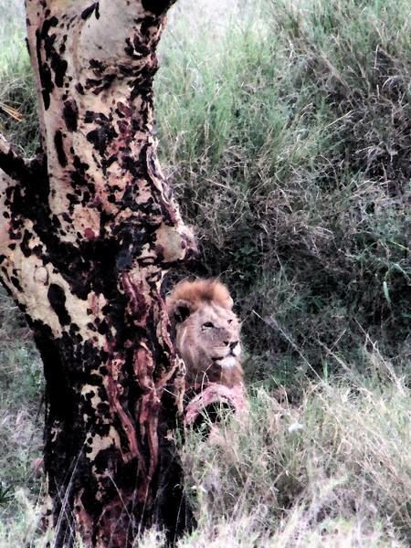 Safari Tanzania 5