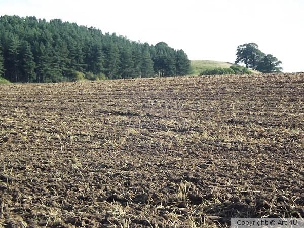 Open fields 5