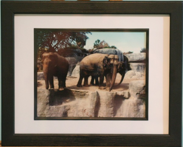 Framed 11 x 14 in. Elephants Photograph -