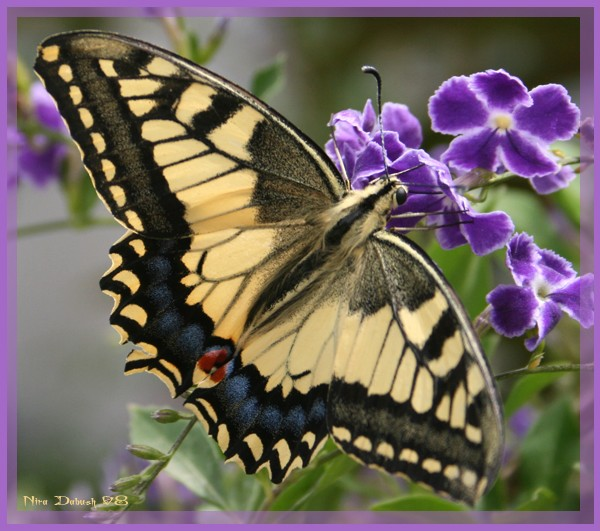 The Butterfly Found His Flower...