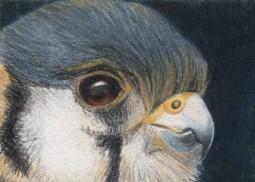 Bird of Prey - ACEO