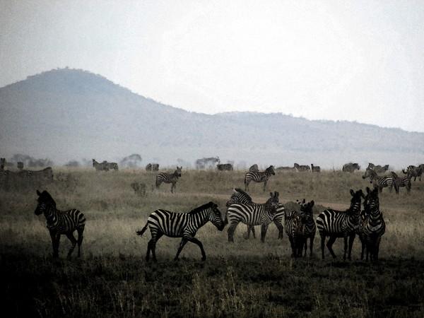Safari Tanzania 6