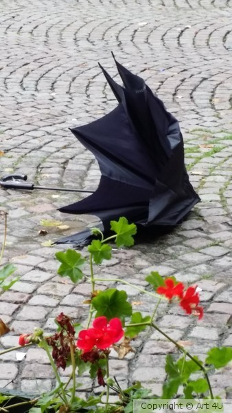 Death of an Umbrella - on a windy day