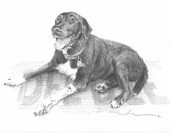 black happy dog drawing mike theuer