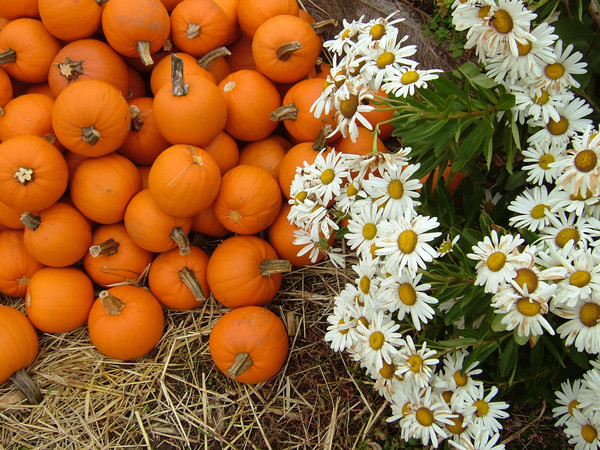 Pumpkins and Daisys
