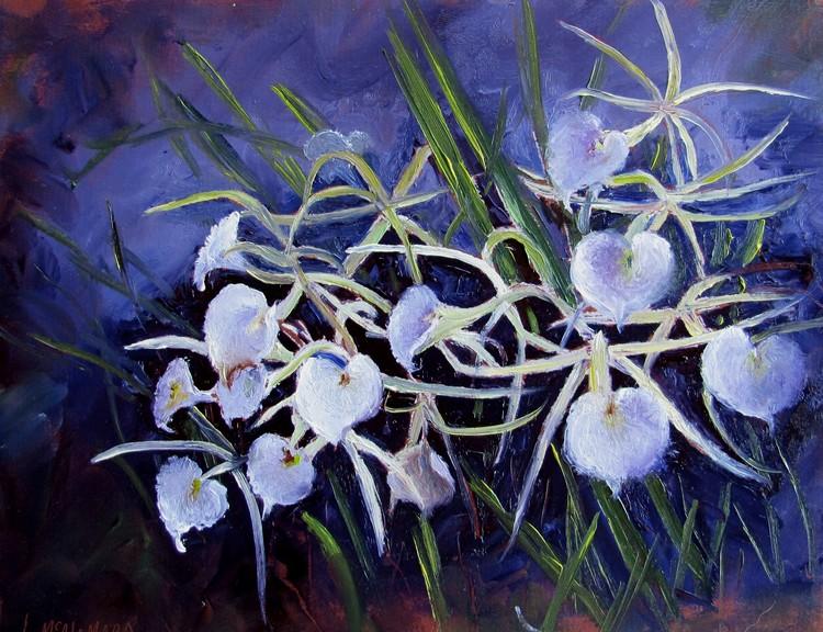 1142 Lady of the Night Orchids Brassavola Nodosa