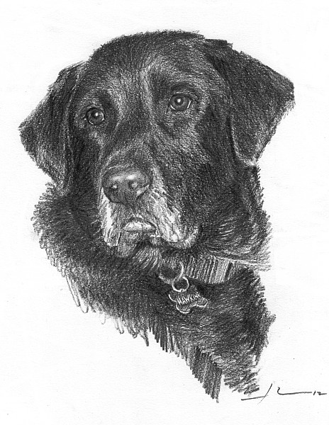 black lab drawing mike theuer