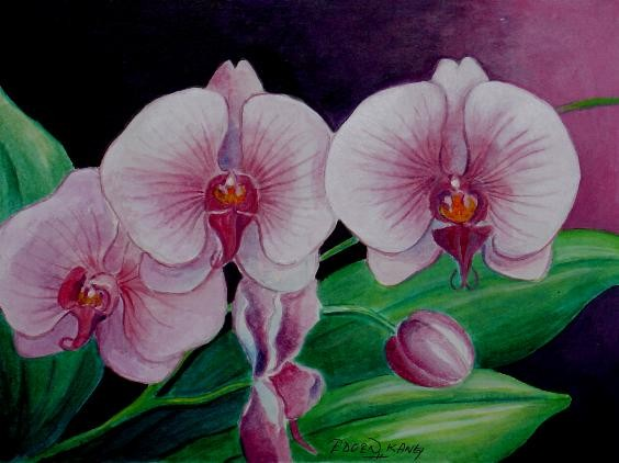 Borneo Orchid