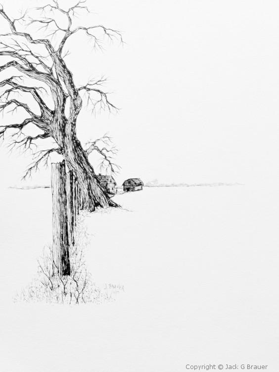 Property Line Tree    171109