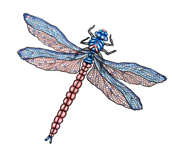 Emperor Dragonfly