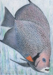 Fish - ACEO