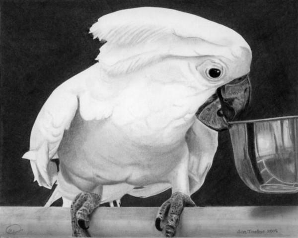 Loredana's Cockatoo