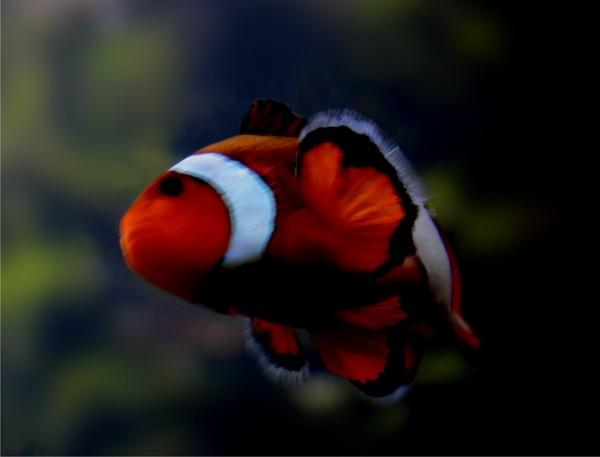 Found Nemo?