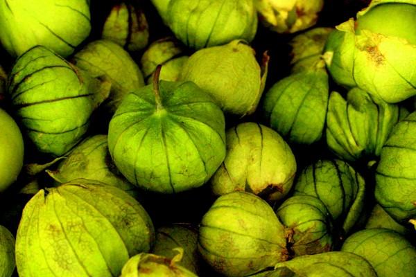 Tomatillos verdes para la salsa
