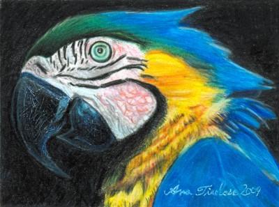 Parrot Miniature