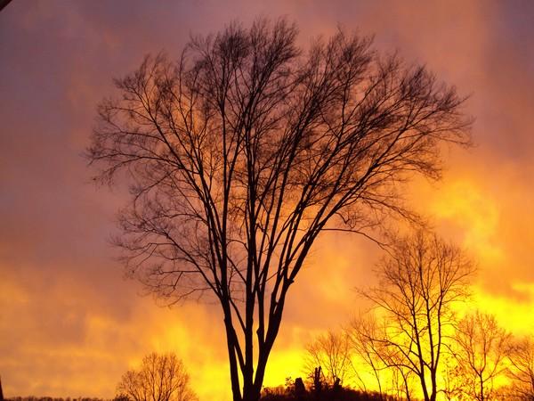 Sunset Beech