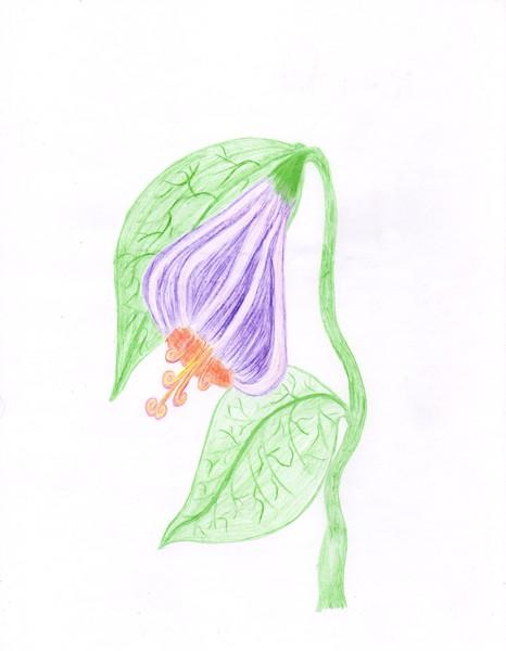 Weeping Damsil - Fairy Art