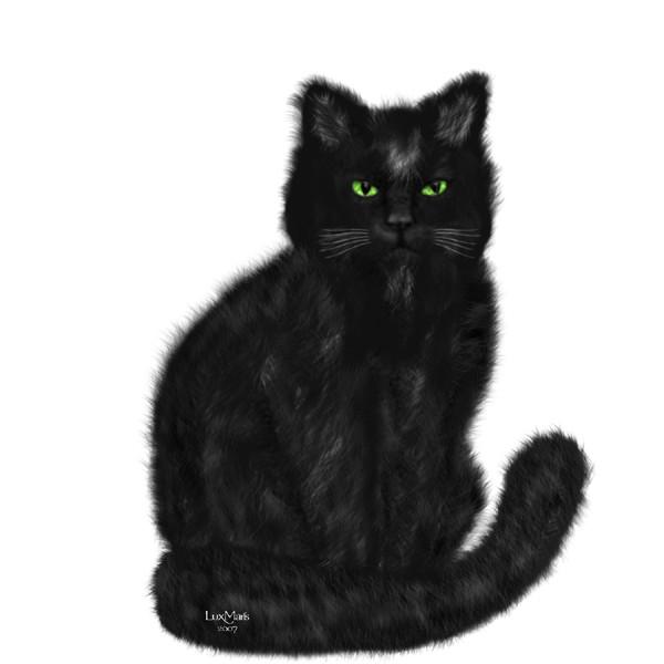 Cat Isabeau