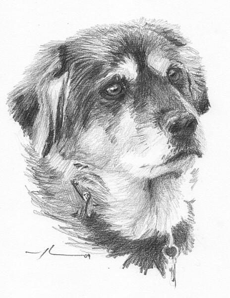 wp-lg sled dog portrait