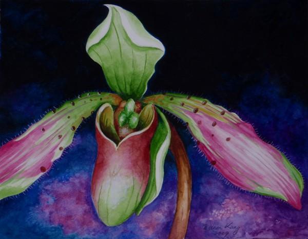 Borneo Slipper Orchid P.Bullenianum
