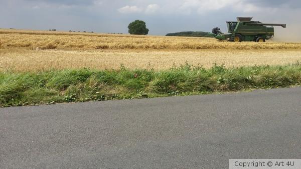 Harvesting Summer 2014