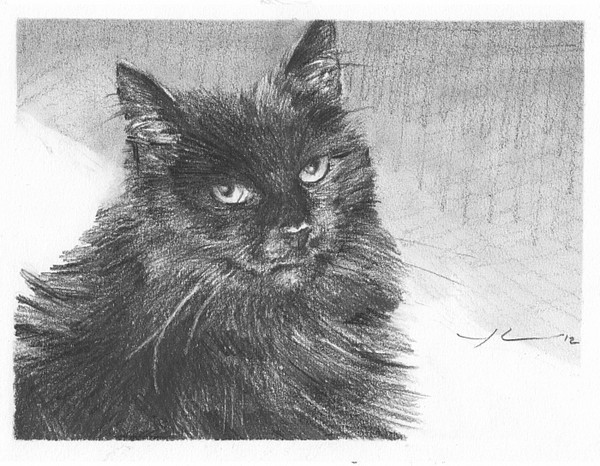black cat pencil portrait