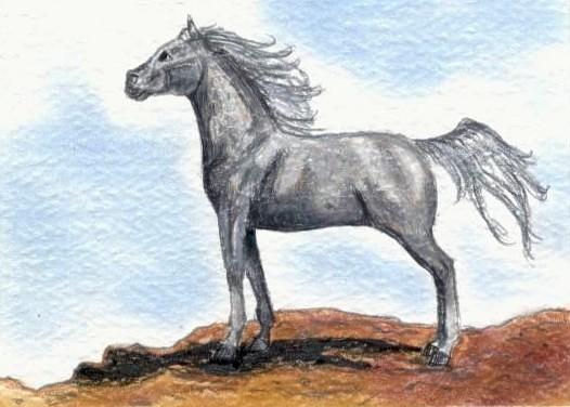 Fleabit Arabian ACEO