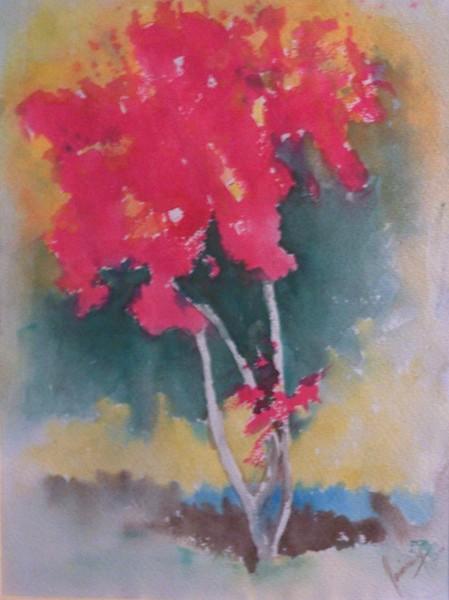 Red Flower Tree. Omaha,NE. USA