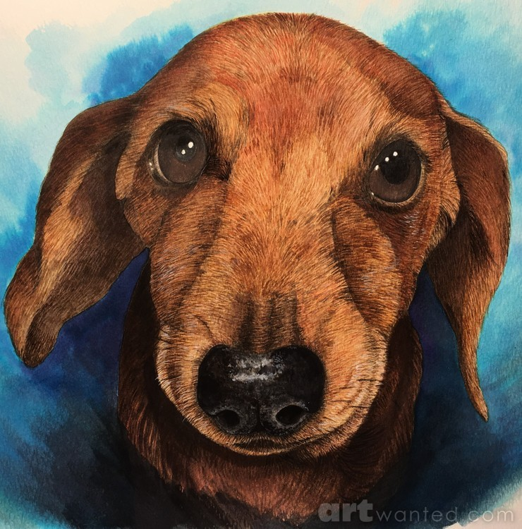 Portrait of Basil the weenie dog