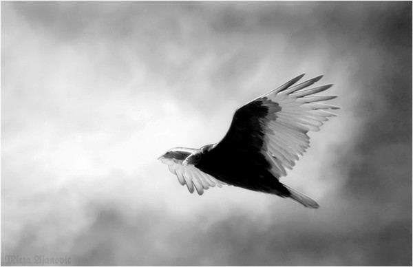 Spirit of Light