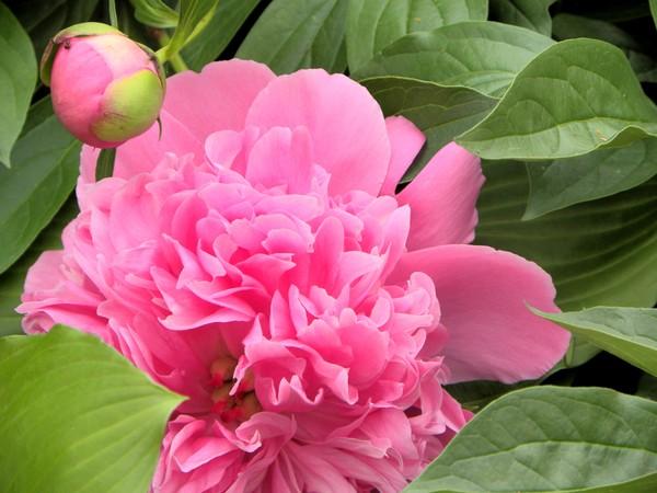 My photo blog_4 image 4.9