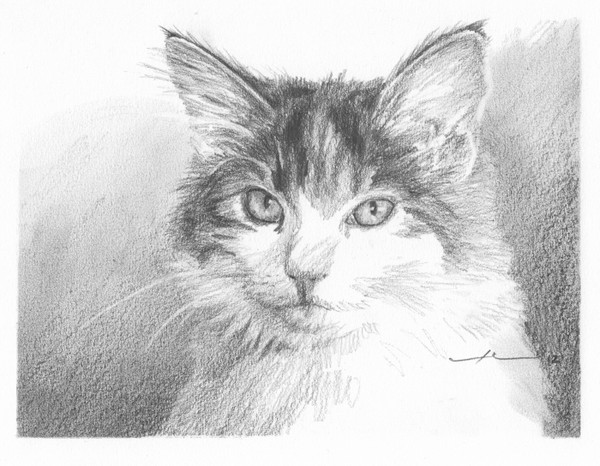 calico cat pencil portrait