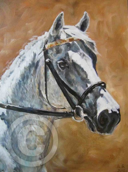Surprize - horse portrait (oil)