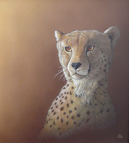 Cheetah by Toni1