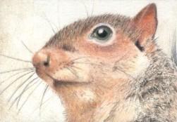 Mr. Squirrel - ACEO