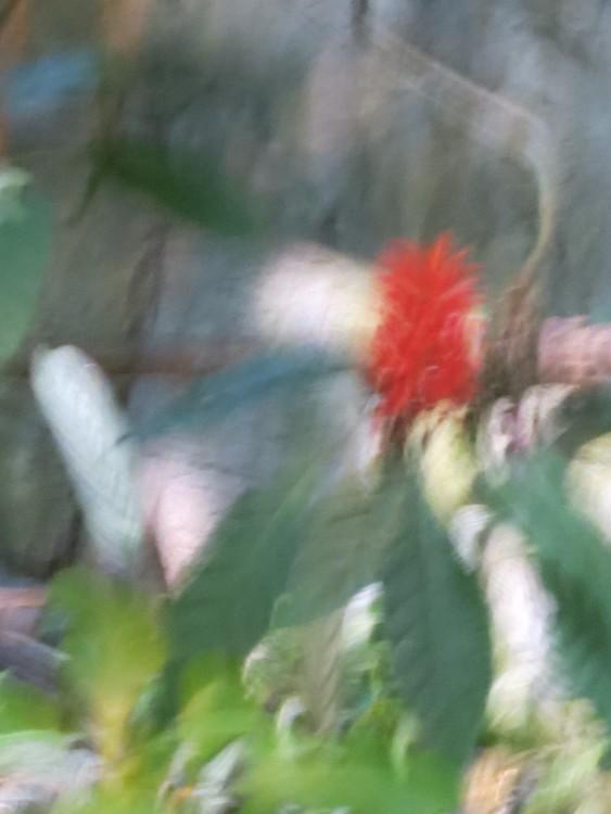 color red impression (1)