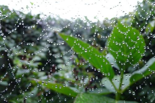 raindrops of 2007