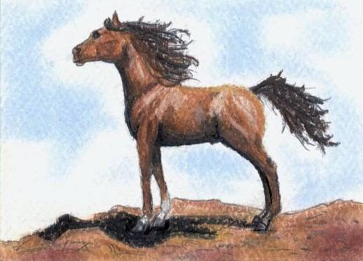 Chestnut Arabian ACEO