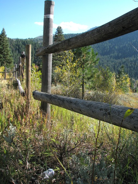A long the fence