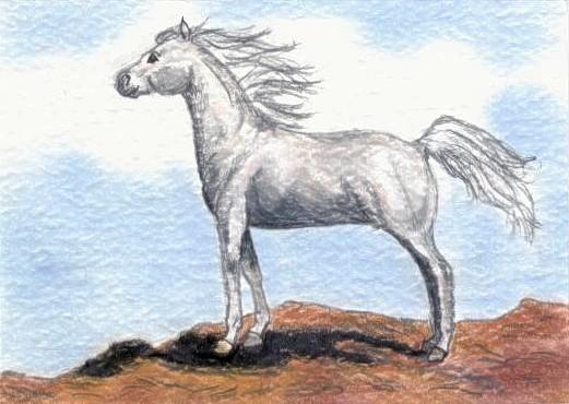 White Arabian ACEO